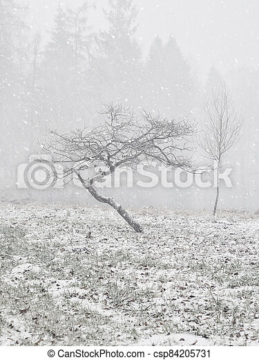Crooked tree in the winter forest. Winter snow landscape. - csp84205731
