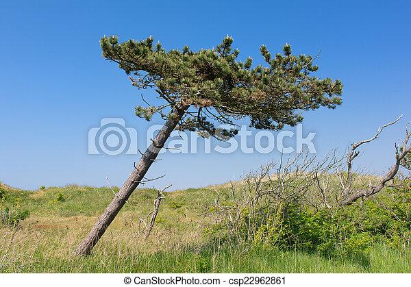 Crooked tree - csp22962861