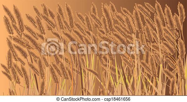 Crop Field - csp18461656