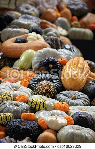 Crop of pumpkins, squash and gourd - csp10027829