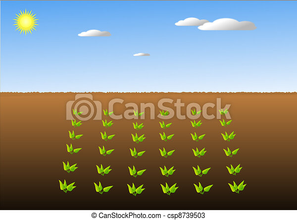 Crops in fields - csp8739503