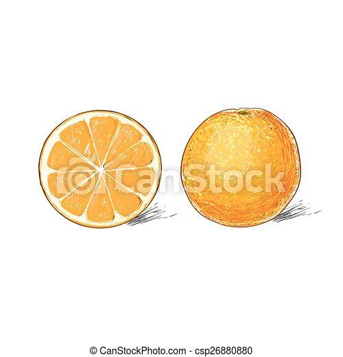 croquis citrus sur dessiner couleur isol e fruit fond orange blanc croquis citrus sur. Black Bedroom Furniture Sets. Home Design Ideas