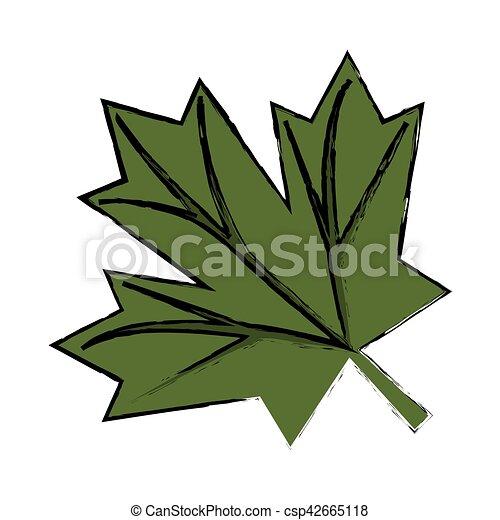 croquis feuille canadien signe vert 233rable 10