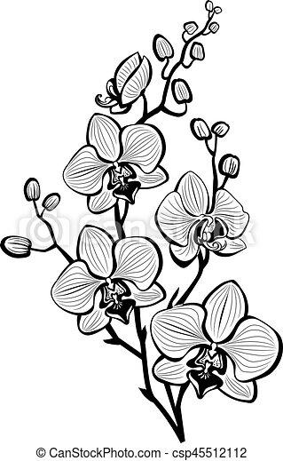 croquis fleurs orchid e croquis fleurs branche orchid e. Black Bedroom Furniture Sets. Home Design Ideas