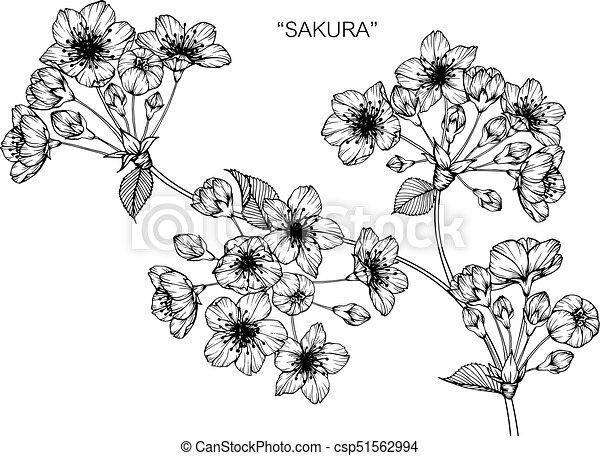 Croquis Flower Fleur Cerise Line Art Noir Blanc Dessin