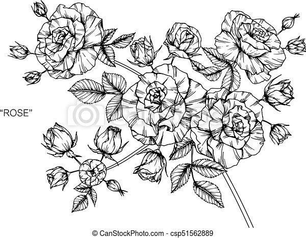 Croquis Flower Line Art Roses Noir Blanc Dessin