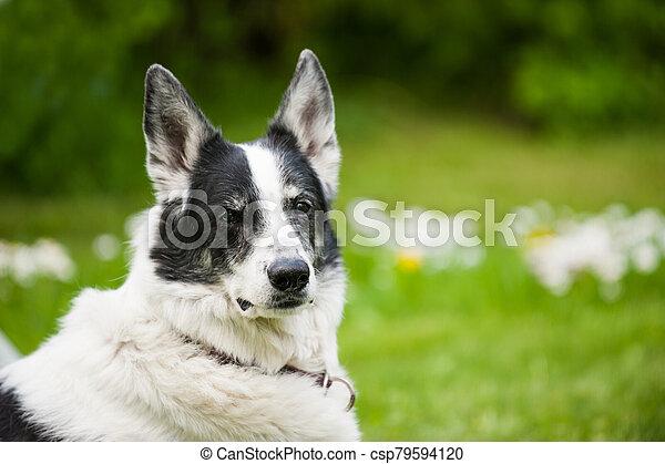 Cross breed dog in a summer garden - csp79594120