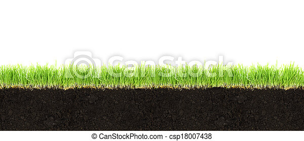 Cross-section of soil and grass isolated on white background  - csp18007438