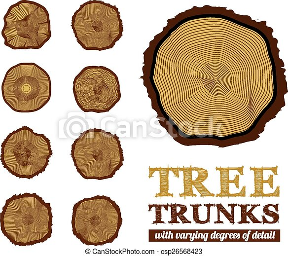 Cross section of the trunk, vector illustration - csp26568423