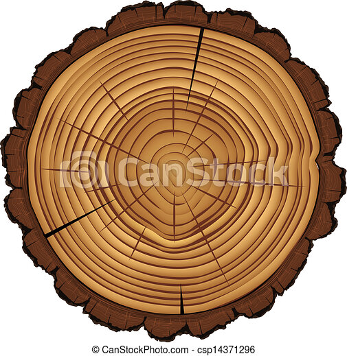 Cross section of tree stump isolated on white - csp14371296