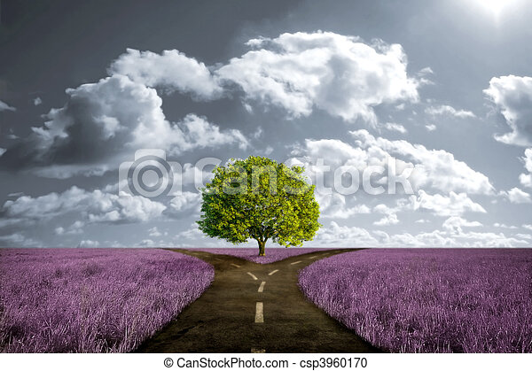 Crossroad in lavender meadow - csp3960170