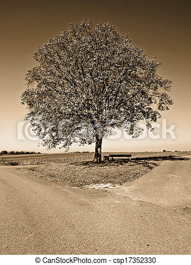 crossroad with tree - csp17352330