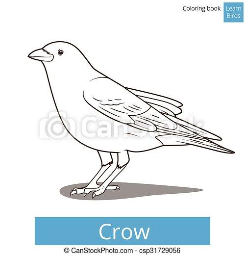 Crow Learn Birds Coloring Book Vector
