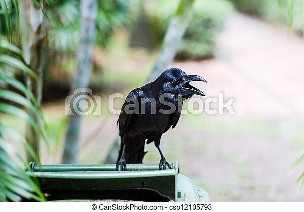 crow - csp12105793