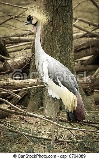 crown bird - csp10704089