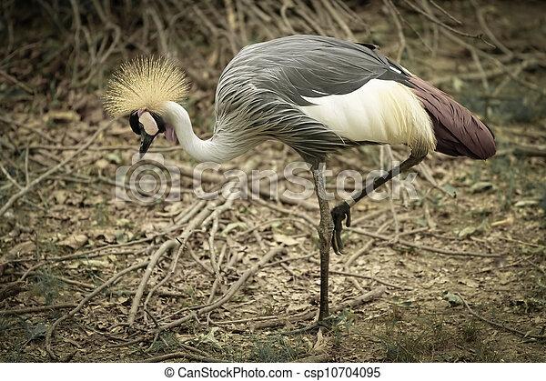 crown bird - csp10704095