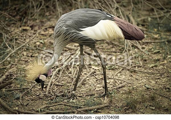 crown bird - csp10704098