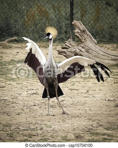 crown bird - csp10704100