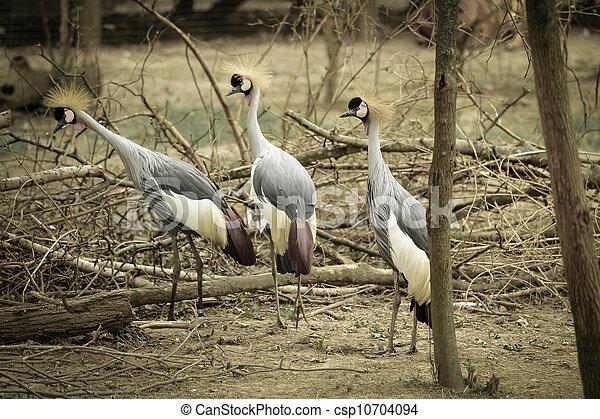 crown birds - csp10704094