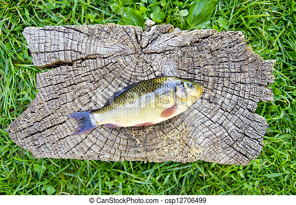crucian carp (Carassius carassius) on old wooden background - csp12706499
