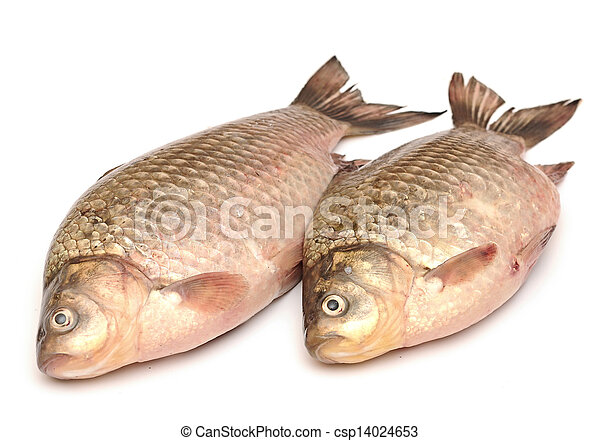 Crucian carp isolated on white background - csp14024653
