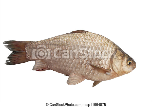 Crucian carp on a white background - csp11994875