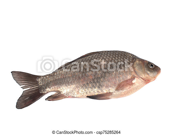Crucian carp on a white background - csp75285264