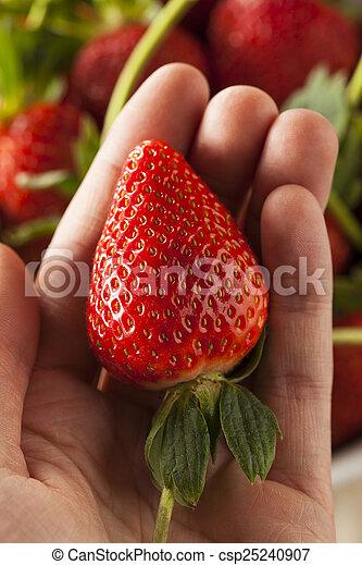 Fresas de tallo orgánico - csp25240907