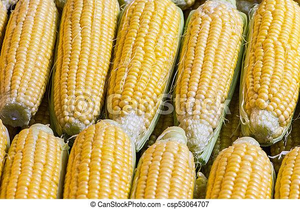 Mazorcas de maíz en bruto - csp53064707