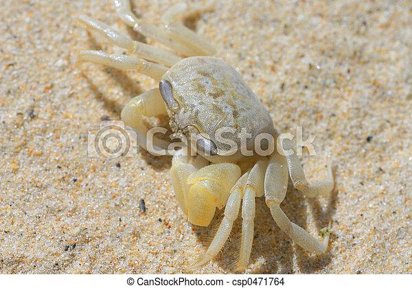 Crusty Crab - csp0471764