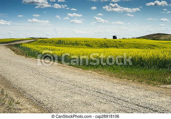 cruzamento, campo, estrada pedregulho, canola - csp28918106