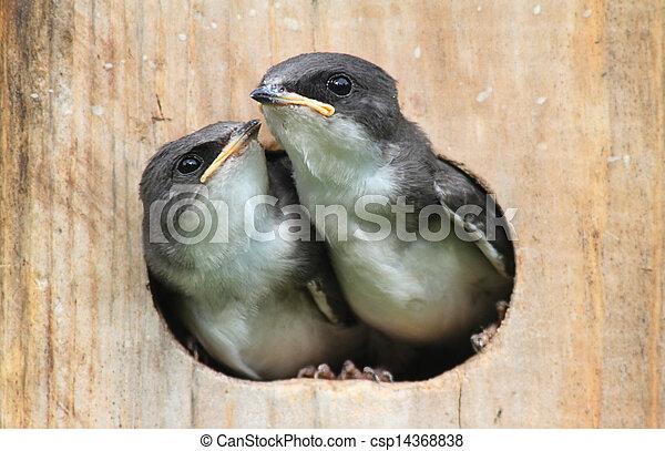 csecsemő, épület, madarak, madár - csp14368838