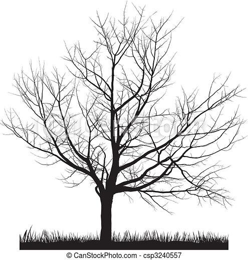 cseresznyefa, tél - csp3240557