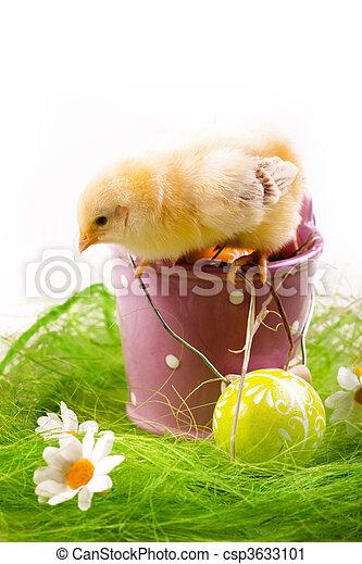 csibe, húsvét - csp3633101