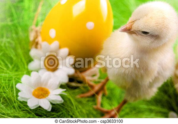 csibe, húsvét - csp3633100
