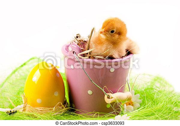 csibe, húsvét - csp3633093