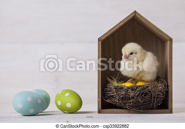 csirke, fogalom, húsvét, fiatal, otthon - csp33922882