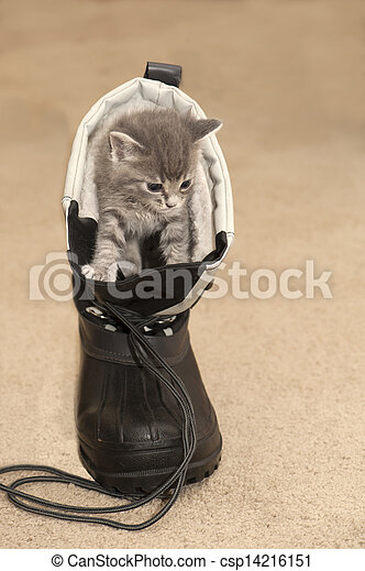 Csizma, macska.