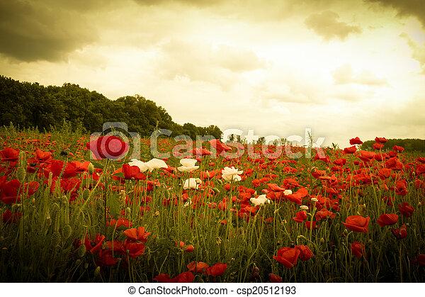 El atardecer en el horizonte cubre el campo de las flores silvestres - csp20512193