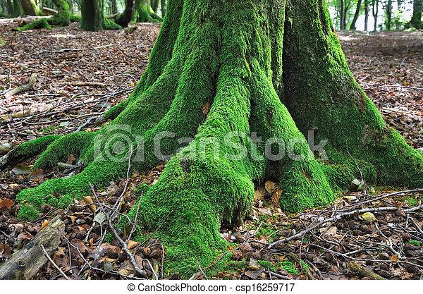 Árbol cubierto de musgo - csp16259717