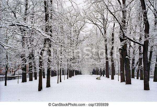 La nieve cubría árboles de avenida - csp1355939