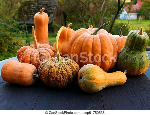 Cucurbita moschata squashes and pumpkins - csp61750538
