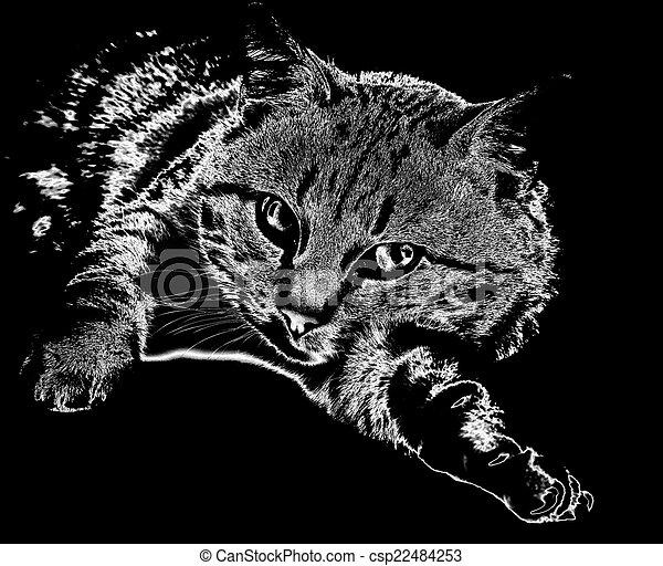 Cuddly cat - csp22484253