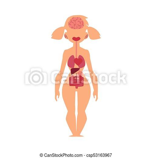 Cuerpo, órganos, anatomía humana, gráfico, interno, hembra. Cuerpo ...