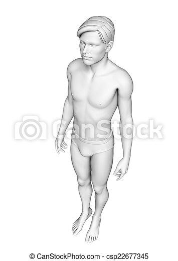 Cuerpo, anatomía, humano. Cuerpo, anatomía, ilustración,... dibujo ...