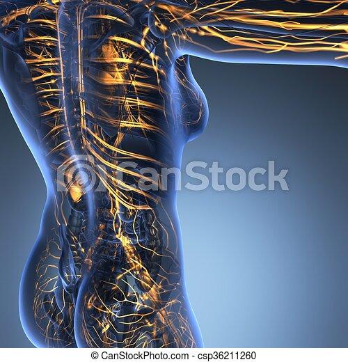 Cuerpo, ciencia, naves, anatomía, sangre, humano,... ilustración de ...