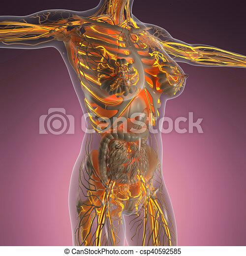 Cuerpo, ciencia, naves, anatomía, sangre, humano, radiografía, brillo.