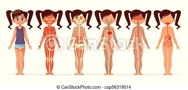 Cuerpo Circulatorio Esquelético Sistema Nervioso Ilustración Caricatura Anatomía Vector Hembra Muscular Niña O Digestivo