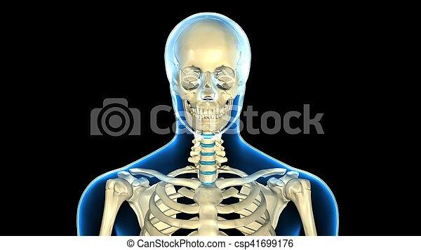 Una ilustración 3D de la anatomía del cráneo humano - csp41699176