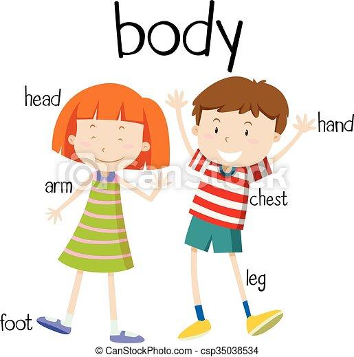 Cuerpo, diagrama, partes, humano, ilustración.